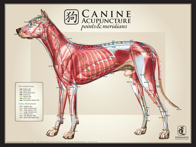 Canine Large Lateral View Chart