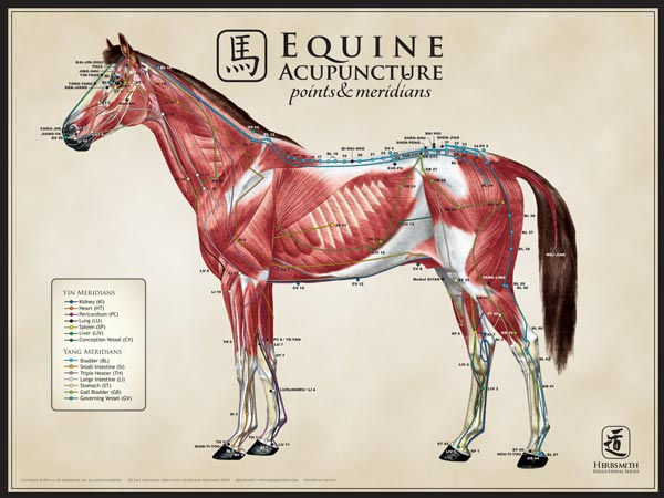 Equine Large Lateral View Chart