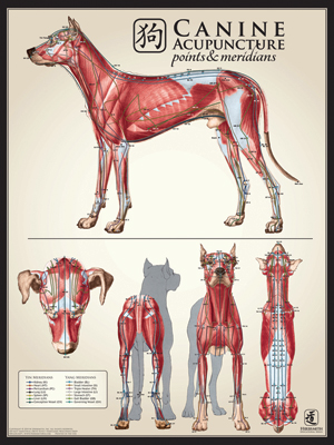Canine Muscle Multi View Chart