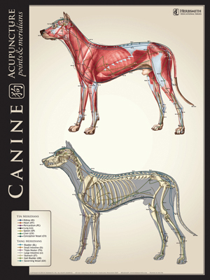 Canine Lateral Bone/Muscle Comparison Chart