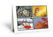 Four Seasons Card - 50 Count