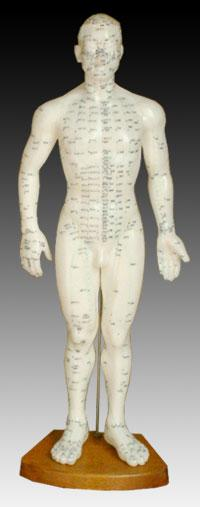"Acupuncture Model, 50cm (20"") Male"