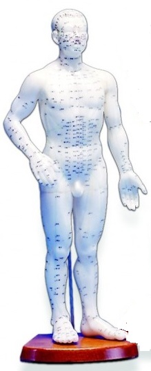 """Human Acupuncture Model Male, 22"""""""