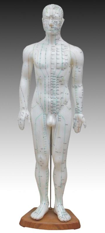 "Acupuncture Model, 60cm (24""), Male"