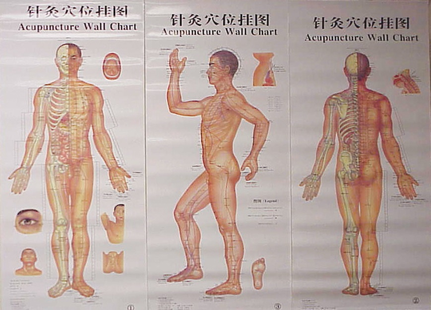 Acupuncture Body Chart, 3pcs
