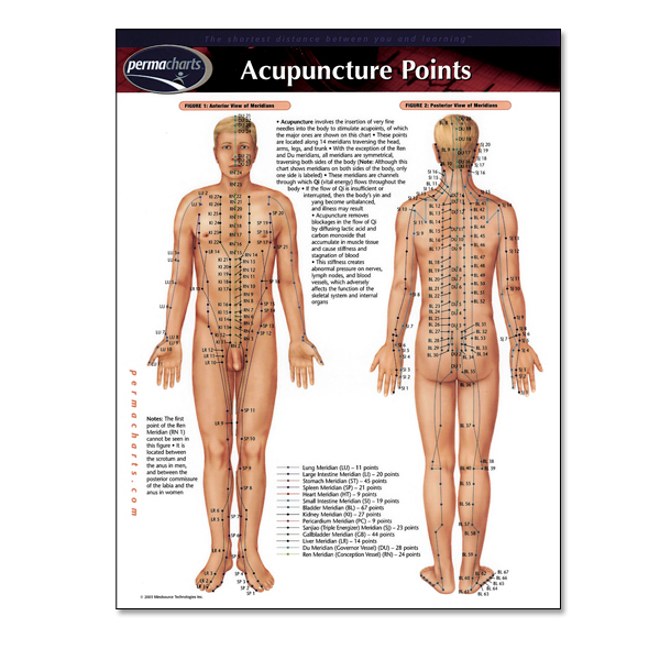 Acupuncture points permachart