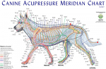 Canine Meridian Chart - Single