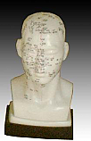 "Head Acupuncture Model 20cm (7.9"")"