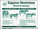 Equine Stretches Chart