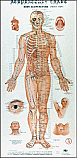 Acupuncture Charts, Wall Form